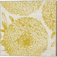 Golden Dahlias II Fine-Art Print