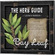 Herb Guide Bay Leaf Fine-Art Print