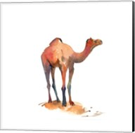Camel I Fine-Art Print