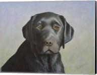 Black Labrador Retriever Fine-Art Print