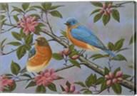 Bluebirds Fine-Art Print
