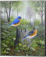 Spring Bluebirds Fine-Art Print