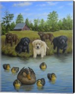 Puppies And Ducklings Fine-Art Print