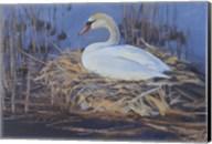 Swan Nest Fine-Art Print