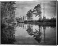 Dark Swamp Fine-Art Print