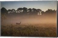 Deer at Daybreak Fine-Art Print