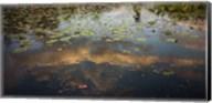 Swamp Cloud Fine-Art Print