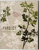 Organic Parsley No Butterfly Fine-Art Print