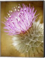 Thistle Bloom Fine-Art Print