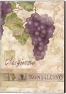 Montalcino Sangiovese 2 Fine-Art Print