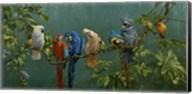 Perroquets Fine-Art Print