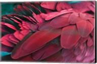 Feather Fine-Art Print