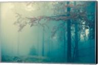 Woods Fine-Art Print