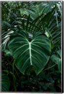 Tropical 3 Fine-Art Print