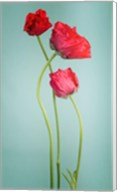 Blue poppy Fine-Art Print