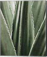 Leaf I Fine-Art Print