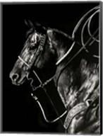 Scratchboard Rodeo V Fine-Art Print