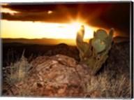 Sunset in the Desert V Fine-Art Print