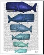 Blue Whale Family Fine-Art Print