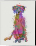 Rainbow Splash Weimaraner, Full Fine-Art Print