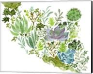 Succulent Field II Fine-Art Print