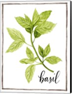 Watercolor Herbs I Fine-Art Print