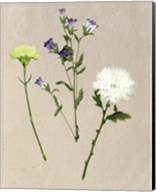 Pretty Pressed Flowers I Fine-Art Print