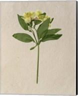 Pretty Pressed Flowers II Fine-Art Print
