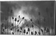 Thistle Finch Fine-Art Print