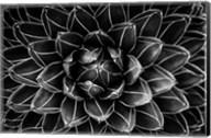 Natural Math Fine-Art Print