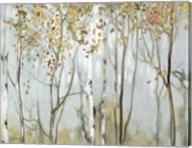 Birch in the Fog II Fine-Art Print