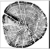 Wood Grain Fine-Art Print
