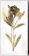 Gold Botanical III Fine-Art Print