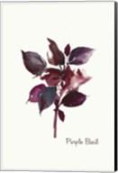 Purple Basil Fine-Art Print