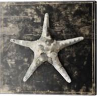 Marble Shell Series III Fine-Art Print
