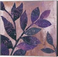 Viola I Fine-Art Print