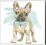 Glamour Pups XI Fine-Art Print