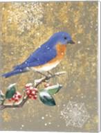 Winter Birds Bluebird Color Fine-Art Print