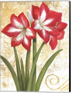 Winter Birds Amaryllis I Gold and White Fine-Art Print