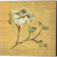 Dogwood Blossom on Gold Fine-Art Print