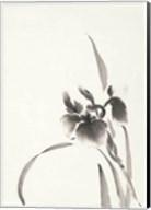 Japanese Iris I Fine-Art Print