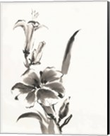 Sumi Daylily III Fine-Art Print