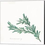Rosemary II Fine-Art Print