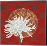 Morning Chrysanthemum IV Fine-Art Print
