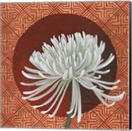 Morning Chrysanthemum III Fine-Art Print