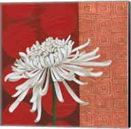 Morning Chrysanthemum II Fine-Art Print