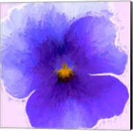 Pansy Purple Fine-Art Print