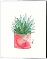 Aloe Fine-Art Print