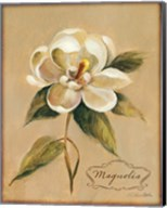 December Magnolia Vintage Fine-Art Print