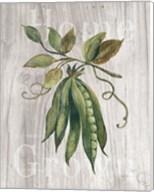 Market Vegetables II on Wood Fine-Art Print